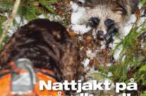 Mårdhund – Nattjakt med wachtelhund