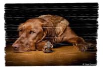 Hundporträtt – Kul och uppskattade jobb!