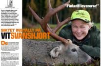 Jakt på Vitsvanshjort i Finland