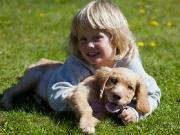 Hundar & Barn